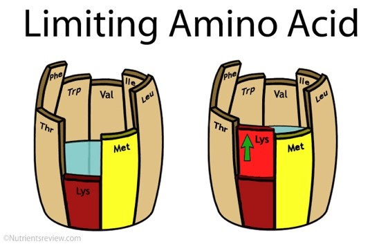 limiting amino acid plant-based protein diagram